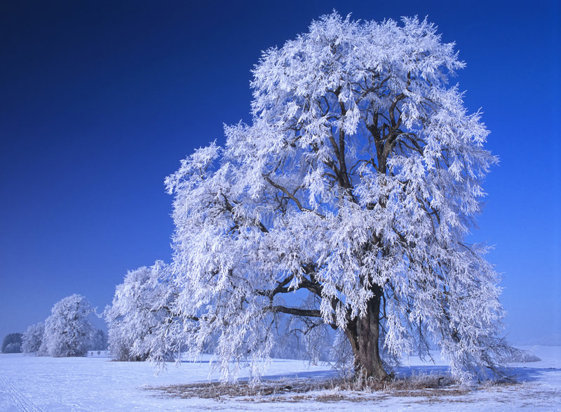Download Perfect Winter Day #4 stock image. Image of bright, festive - 530751