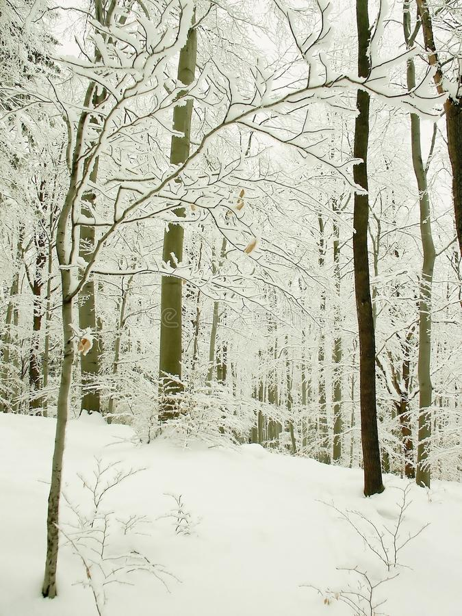 Perfect Winter Forest Scenery Stock Images