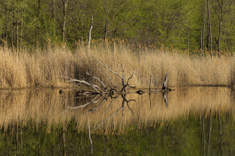 Download Perfecte Afternmoon Op Het Meer Stock Foto - Afbeelding bestaande uit boomstam, moerasland: 54087390