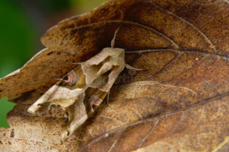 Perfecte Camouflage royalty-vrije stock afbeelding