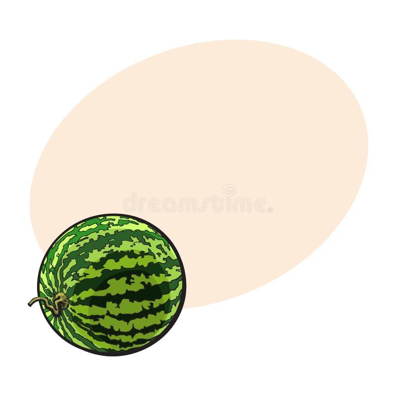 Perfecte gehele gestreepte watermeloen met gekrulde omhoog staart, schetsillustratie royalty-vrije illustratie