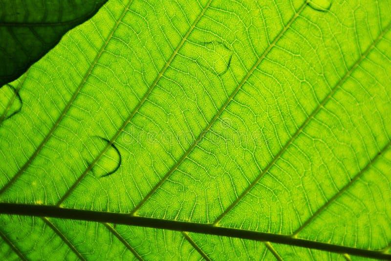 Perfecte groene bladpatronen stock afbeeldingen