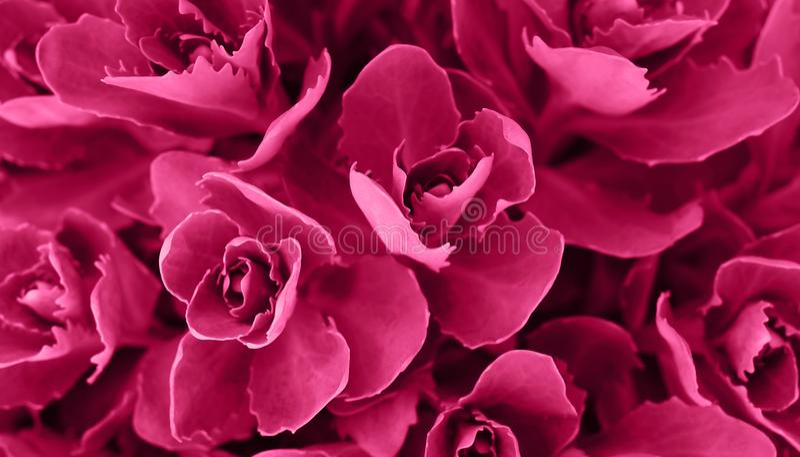 Perfecte natuurlijke succulente patroonachtergrond Roze donkere en humeurige achtergrond voor uw ontwerp Hoogste mening stock foto