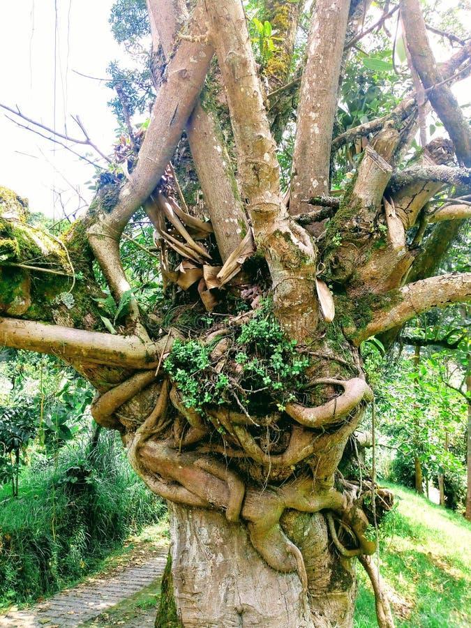 Perfecte unieboom stock afbeeldingen