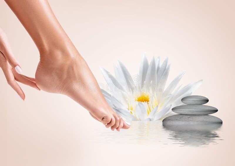 Perfectionnez les jambes femelles dans l'eau avec la fleur de lotus Concept de station thermale photo libre de droits
