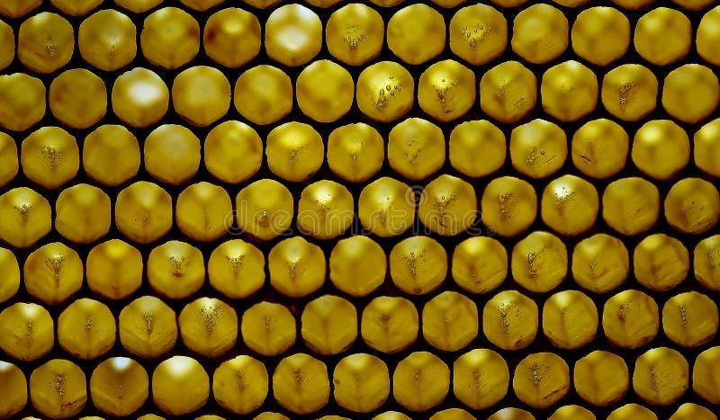 Macro shot of a honeycomb 2 stock photos