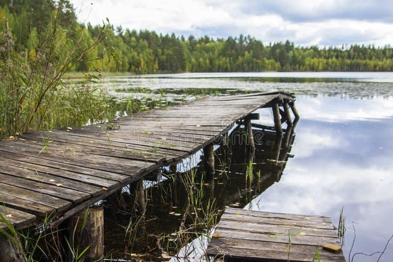 Perfekt bakgrundsskogsjö med träd och gamla trägångbanor fotografering för bildbyråer