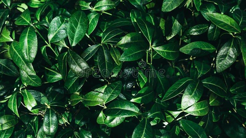 Perfekt naturlig bakgrund gjorde av ny sidamodell Mörk och lynnig känsel Top besk?dar royaltyfri bild