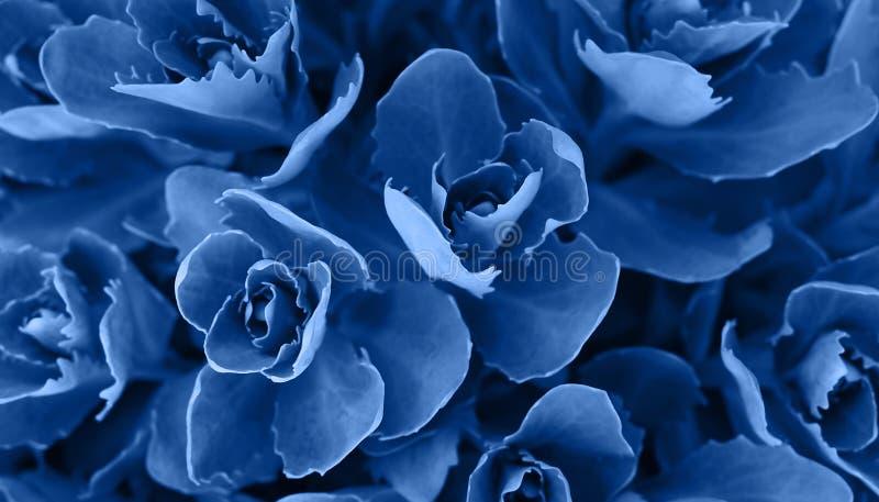 Perfekt naturlig suckulent modellbakgrund Blå mörk och lynnig bakgrund för din design Top besk?dar arkivbilder