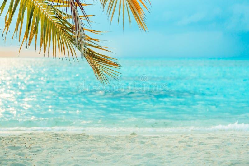 Perfekt strandbaner, solnedgångljus och oskarpt lugna hav, palmblad över blått havsvatten royaltyfri bild