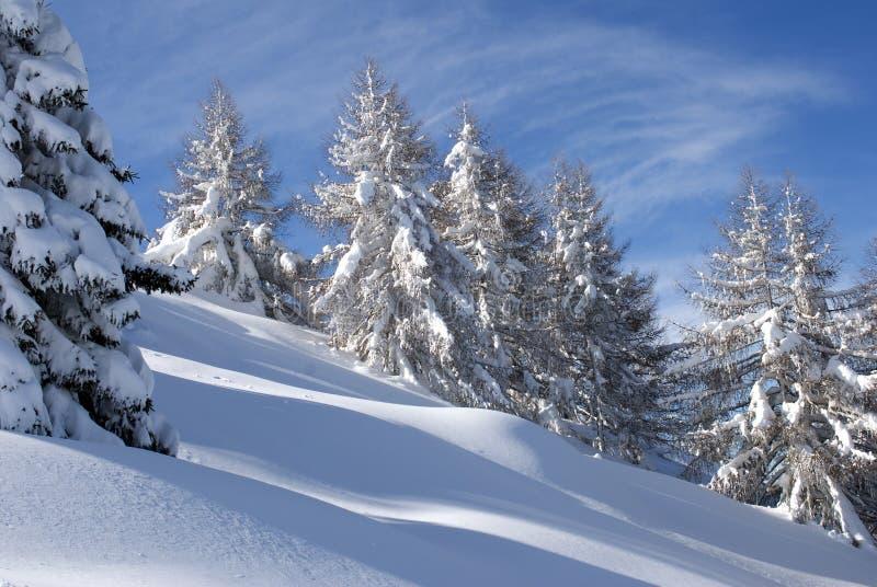 perfekt vinter för skog royaltyfria foton