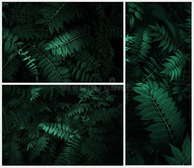 Perfekta naturliga sidor mönstrar härligt tropiskt royaltyfria foton