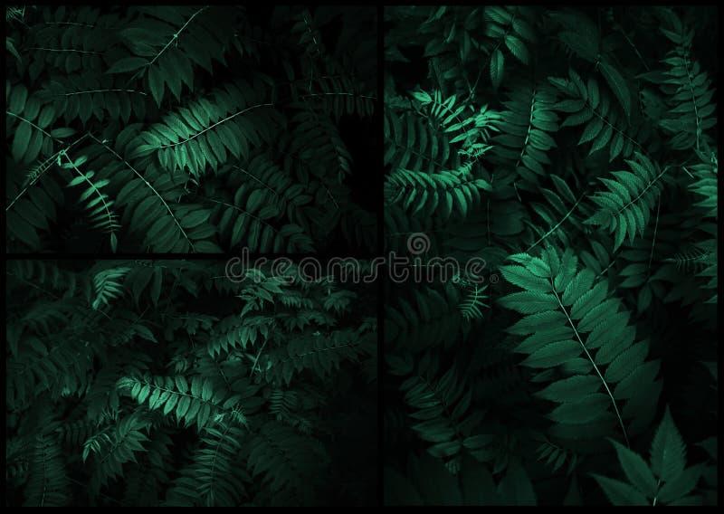 Perfekta naturliga sidor mönstrar härligt tropiskt arkivfoton