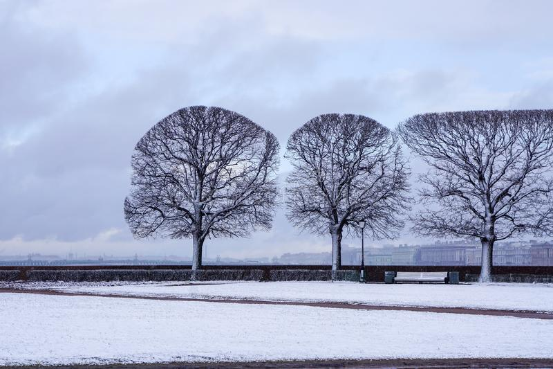 Perfekta träd i våren, perfectionism, symmetri royaltyfria bilder