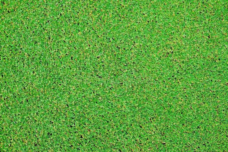 Perfekte Beschaffenheit des grünen Grases vom Golffeld stockbilder