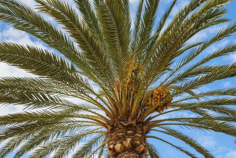 Perfekte Palme stockbild