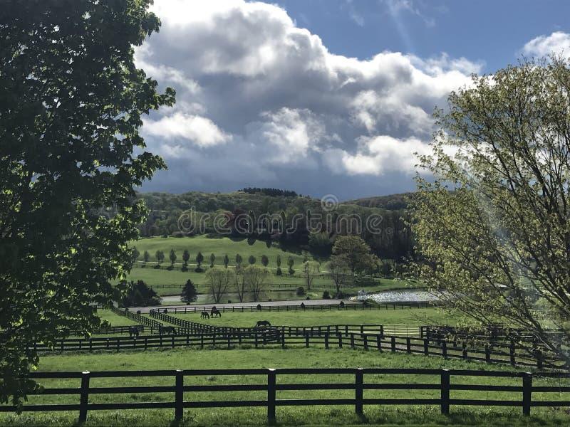 Perfekter Bauernhof des Bildes Pferde lizenzfreie stockbilder