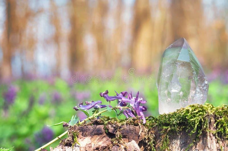 Perfekter großer glänzender Kristall des transparenten Quarzes im Sonnenlicht auf Frühlingsnatur Edelstein auf Moosstumpf-Hinterg lizenzfreie stockfotos