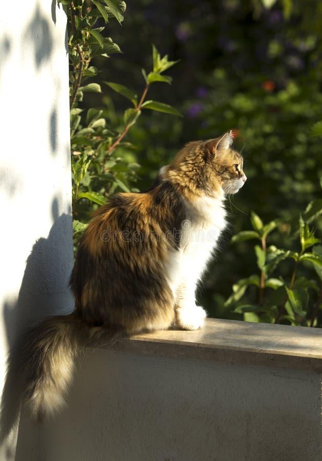 Perfil completo do corpo de um gato de chita adorável que senta-se sob o sol da manhã imagem de stock