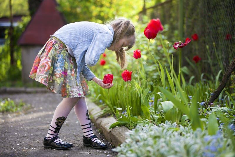 Perfil da menina bonita bonito da criança exterior na cama de flor que olha a tulipa vermelha brilhante no dia ensolarado do verã fotos de stock royalty free