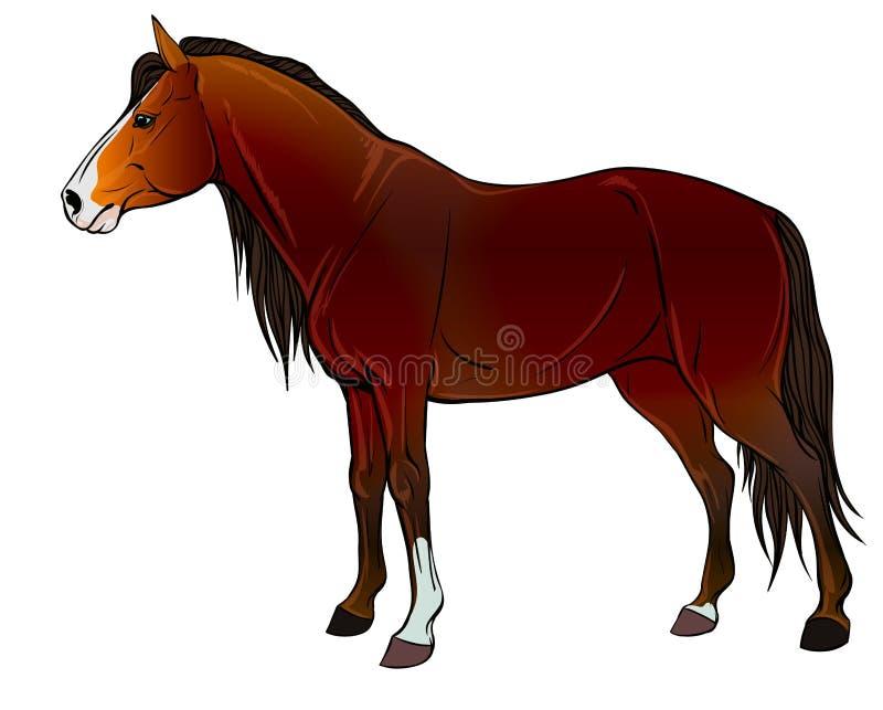 Perfil de los caballos salvajes libre illustration