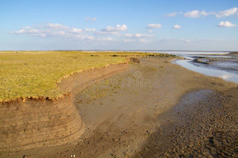 Perfil de solo no pântano maré fotografia de stock