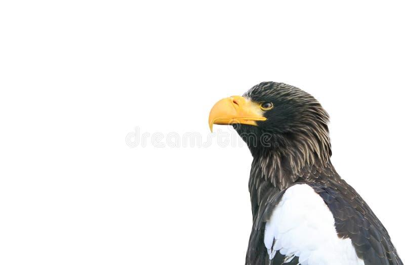 Perfil de un pájaro un águila con un pico grande en un blanco foto de archivo