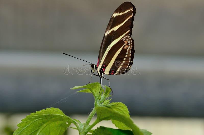 Perfil de una mariposa en una hoja fotografía de archivo