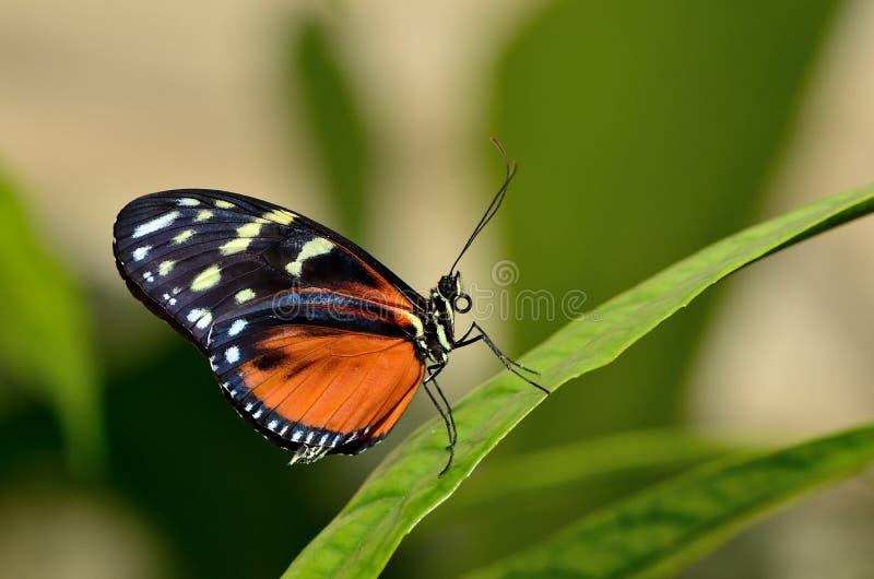 Perfil de una mariposa en una hoja imágenes de archivo libres de regalías