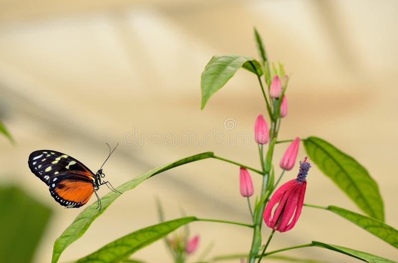 Perfil de una mariposa en una hoja imagenes de archivo