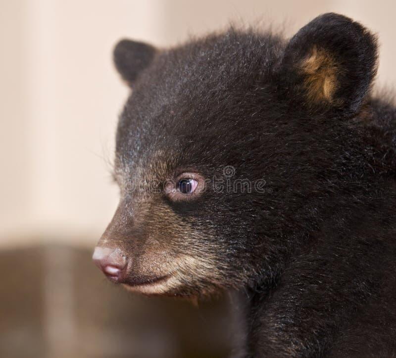 Perfil del oso negro del bebé imagenes de archivo