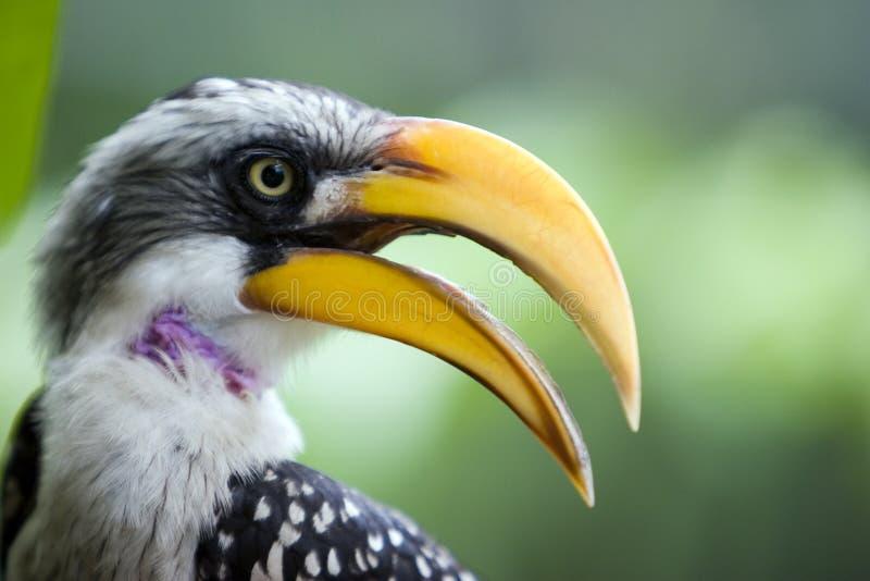 Perfil del pájaro amarillo del pico imágenes de archivo libres de regalías
