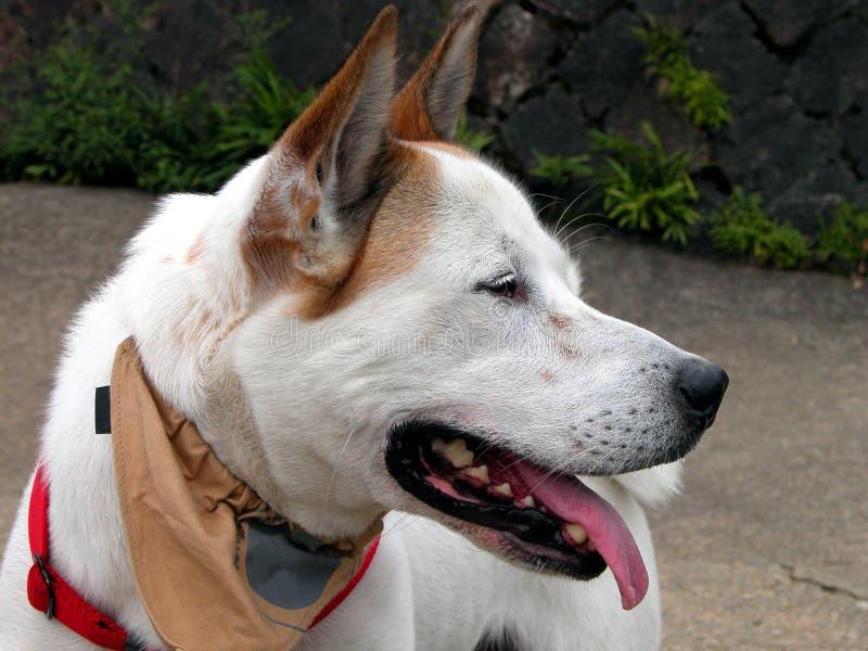 Perfil do cão imagem de stock