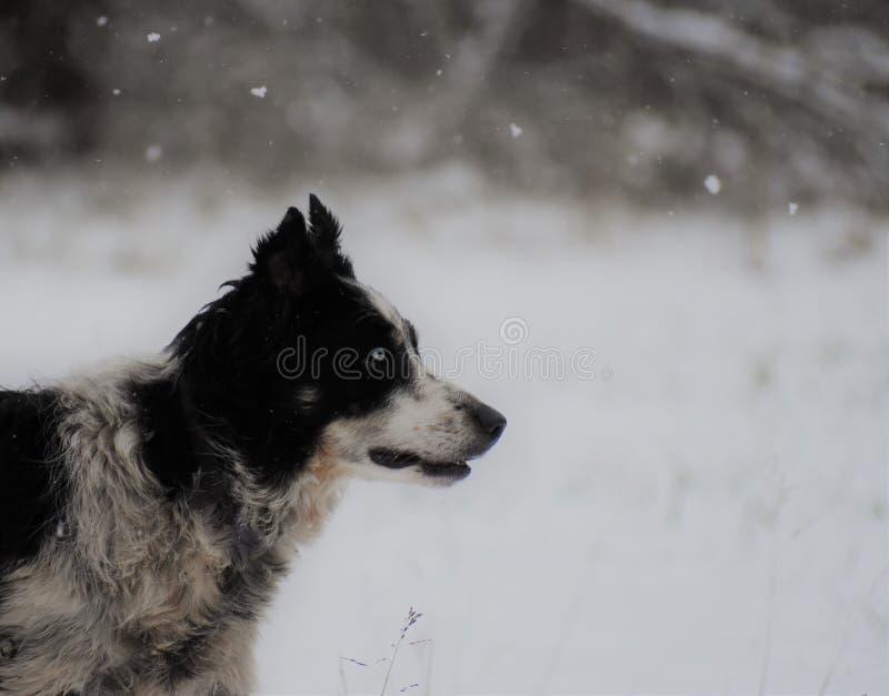 Perfil do cão na neve imagem de stock royalty free