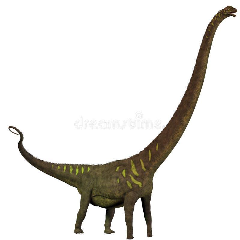 Perfil do youngi do Mamenchisaurus ilustração royalty free
