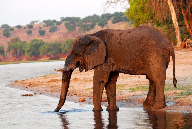 Perfil fangoso 2 del elefante imagen de archivo libre de regalías