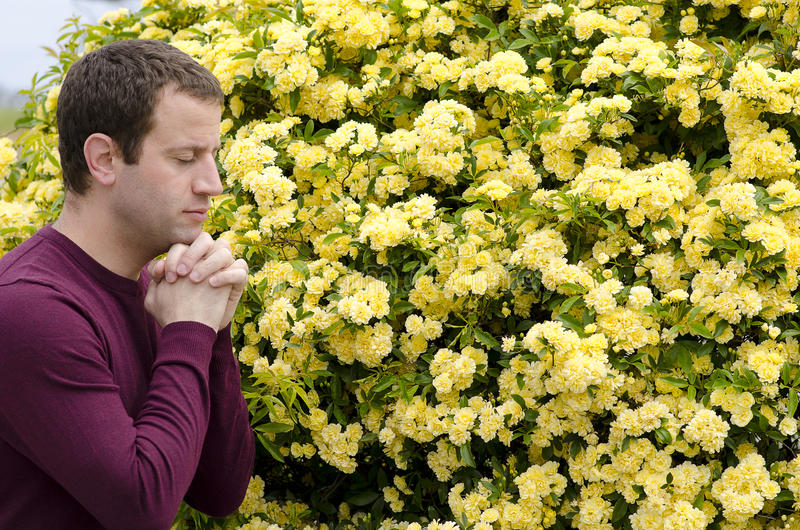 Perfil lateral del hombre que ruega por las flores amarillas foto de archivo