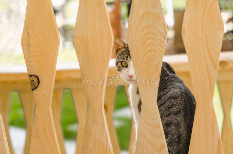 Perfil lateral do gato foto de stock