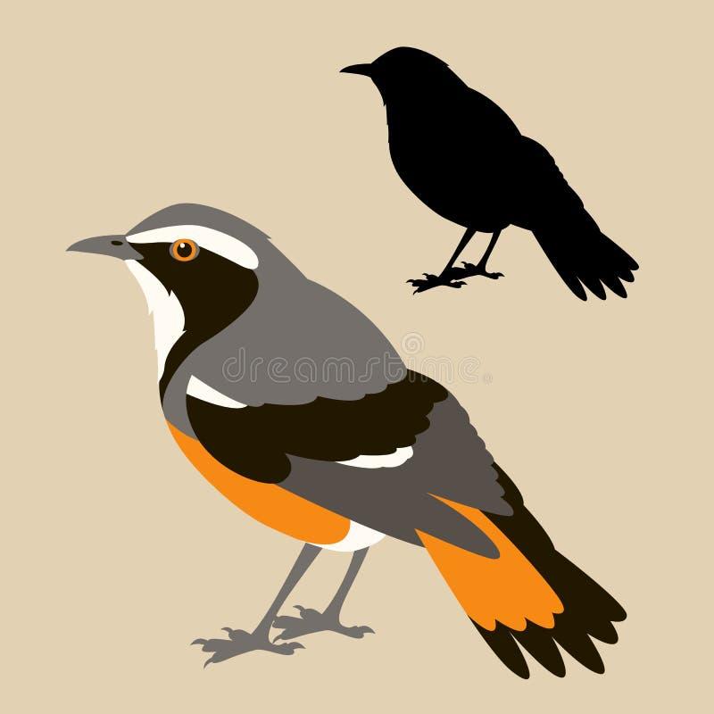 Perfil liso do estilo da ilustração do vetor da silhueta do preto do pássaro do pisco de peito vermelho ilustração stock