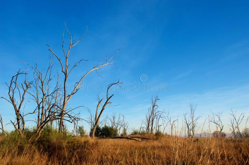 Perfil muerto del árbol imagen de archivo