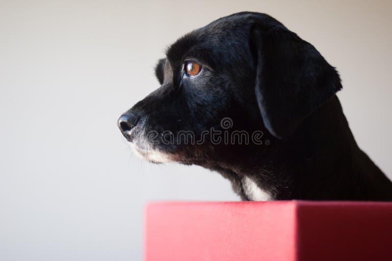 Retrato del perro del perfil fotos de archivo