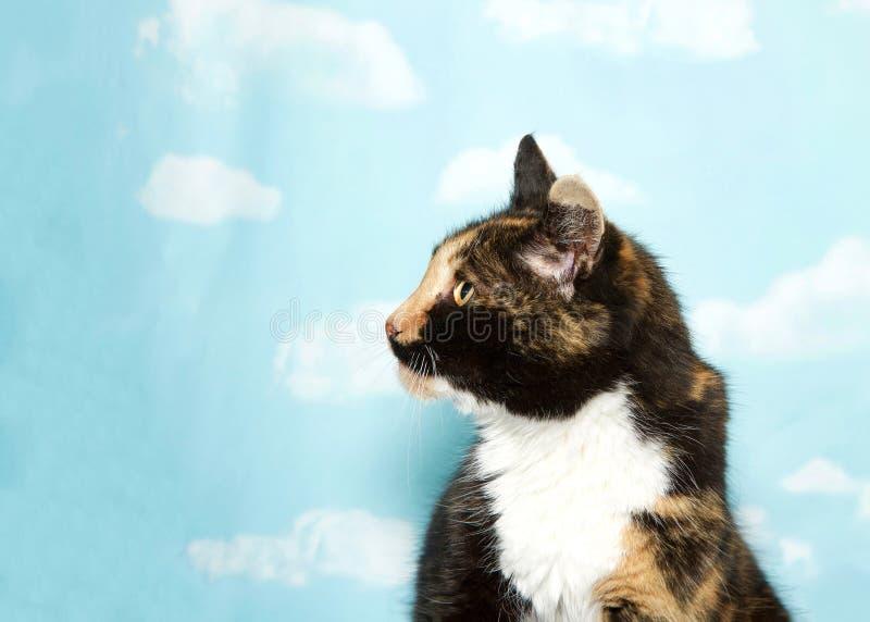 Perfile o retrato de um gato de chita contra o contexto do céu imagens de stock royalty free