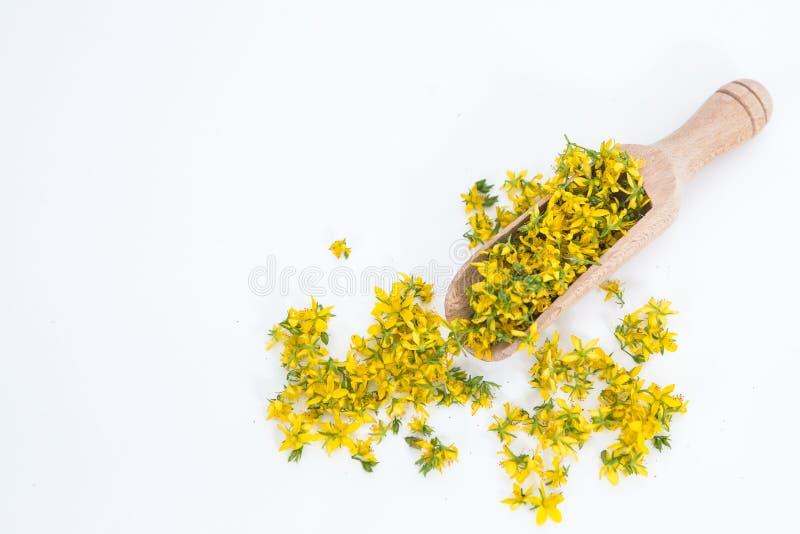 Perfore la hierba de San Juan es planta muy rara y sana foto de archivo libre de regalías