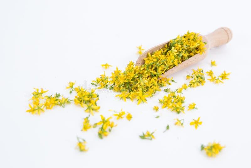 Perfore la hierba de San Juan es planta muy rara y sana imagen de archivo libre de regalías