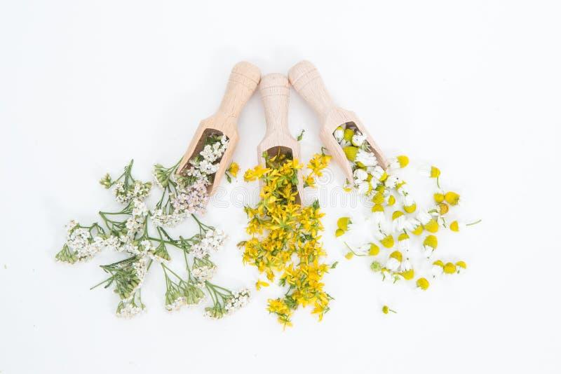 Perfore la hierba de San Juan es planta muy rara y sana imagen de archivo