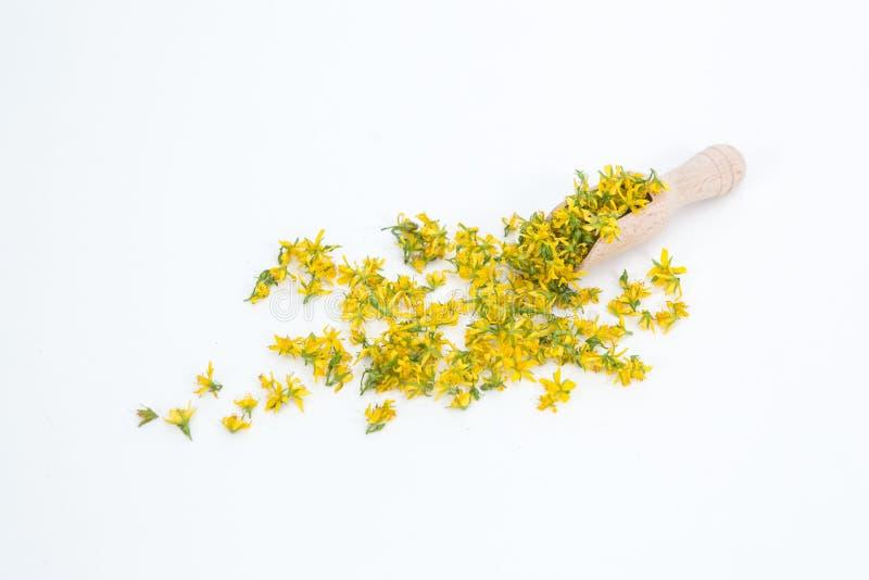 Perfore la hierba de San Juan es planta muy rara y sana fotografía de archivo libre de regalías