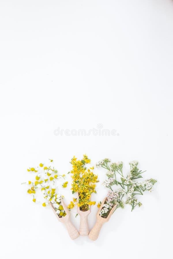 Perfore la hierba de San Juan es planta muy rara y sana fotografía de archivo
