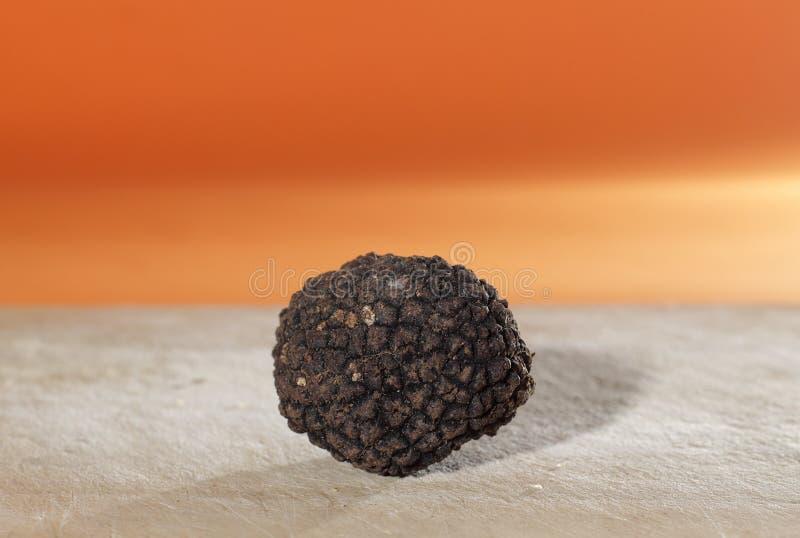 Perfumado mais dos cogumelos, a trufa preta francesa imagem de stock