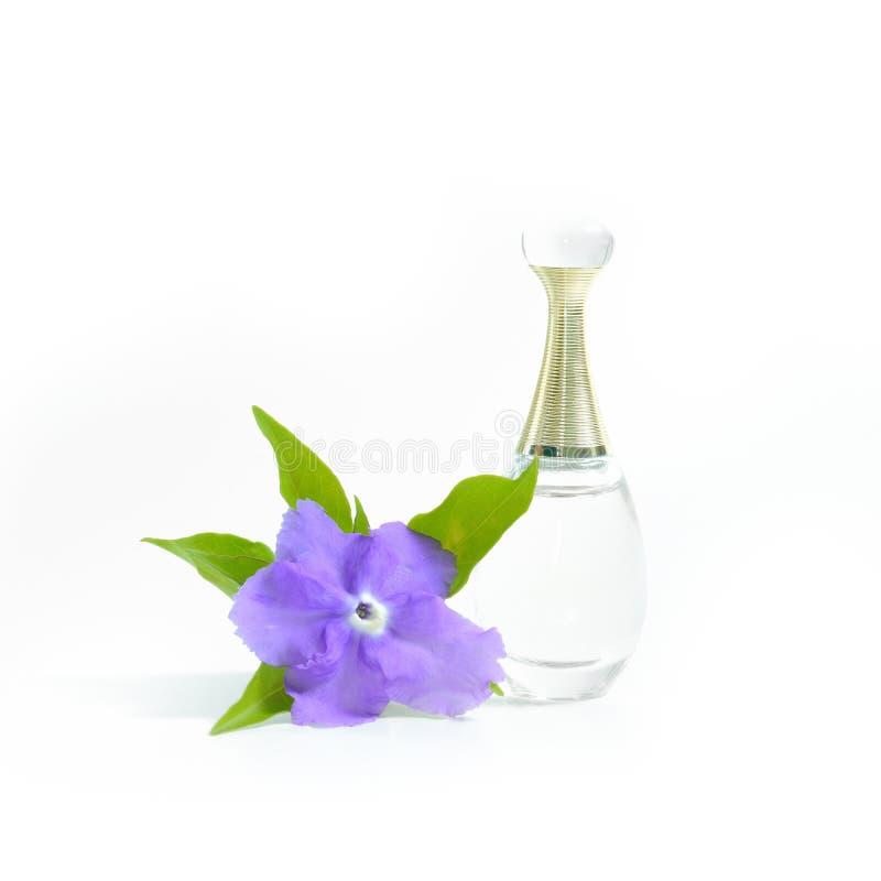 Perfume bonito na garrafa e isolado violeta da flor em b branco fotos de stock
