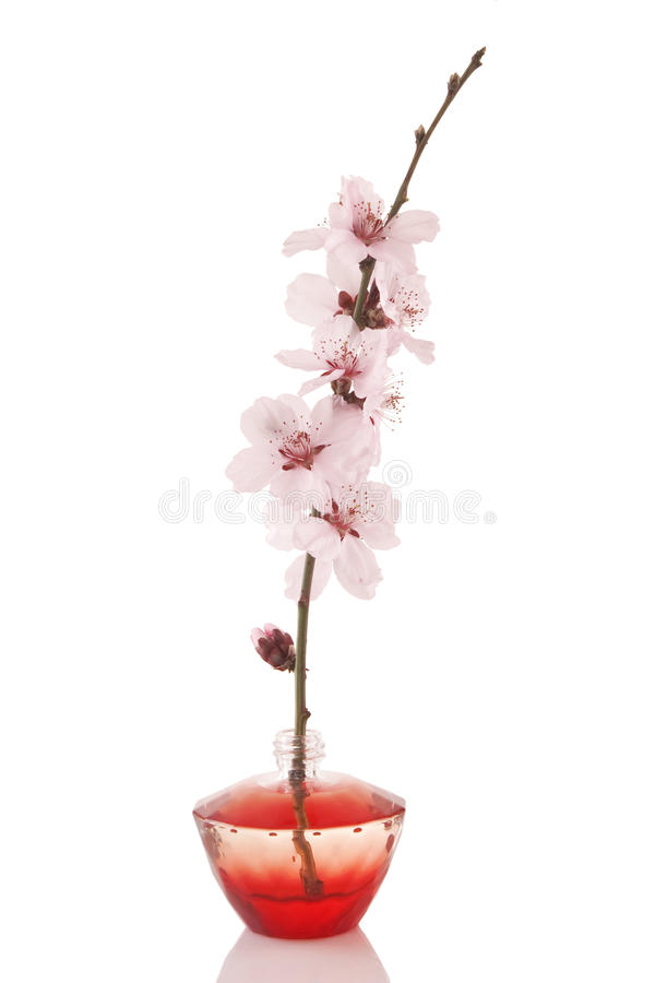 Perfume bottle and cherry flower stock photography